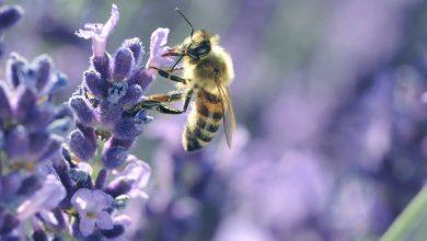 Jak dbać o ogród w zgodzie z równowagą biologiczną?